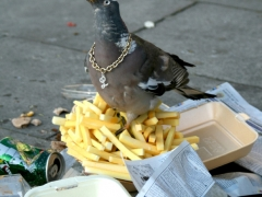 07homey_pigeon_crop_sz