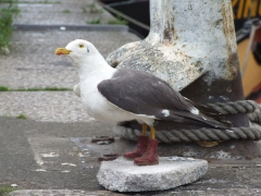 sea-gull-side