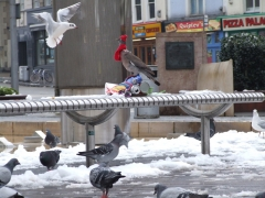 08pigeon_english_by_filthy_luker_UK