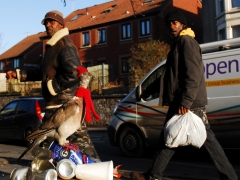 homeless_pigeon_sz