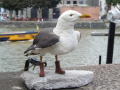 sea-gull-front