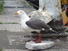 sea-gull-side
