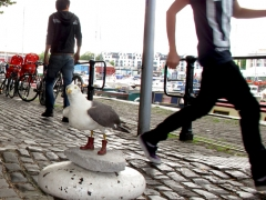 stephen-seagull-at-large
