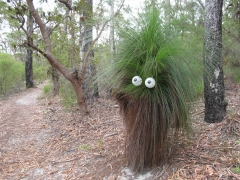 bush-head