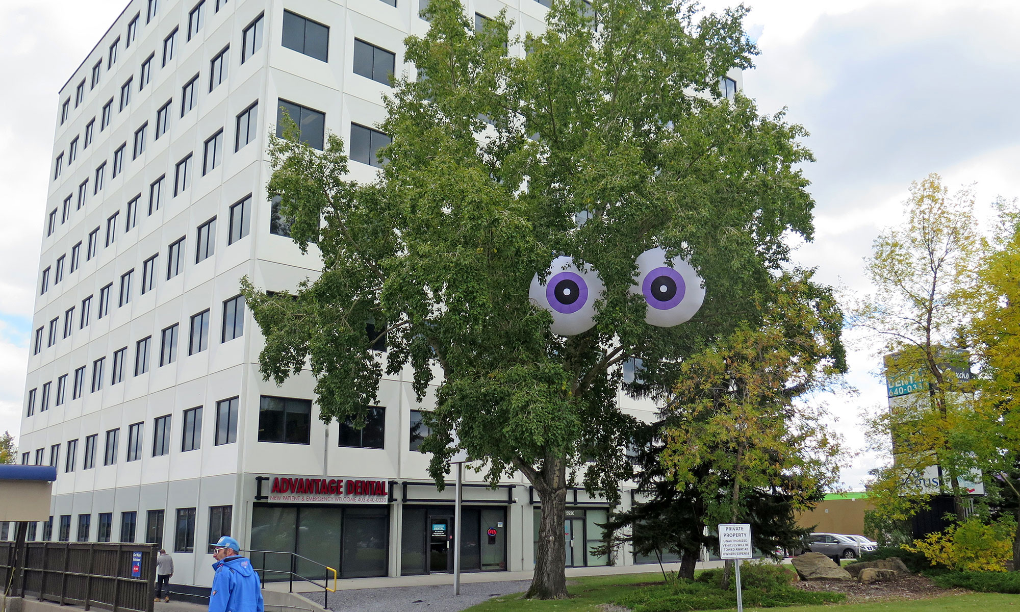 Pair of 2m eyeballs in a tree with a purple iris
